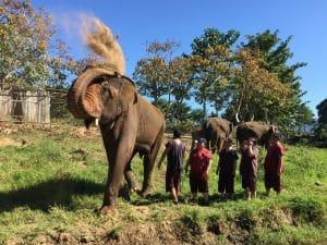 DAY 2 ELEPHANTS 1