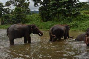 ELEPHANTS MAE WANG 16