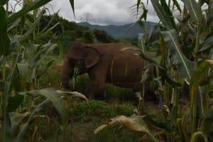 ELEPHANTS MAE WANG 21