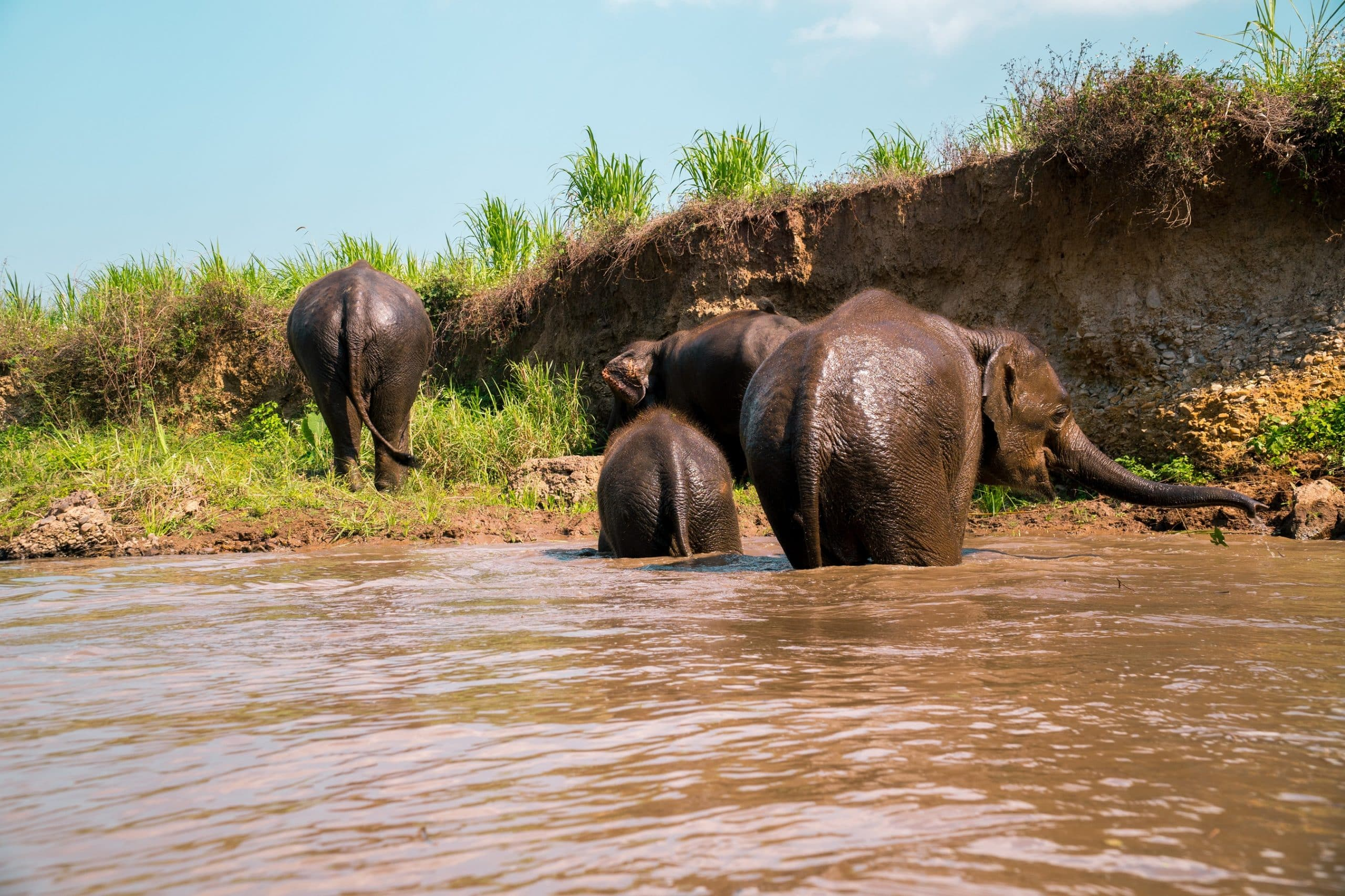 ELEPHANTS MAE WANG 6