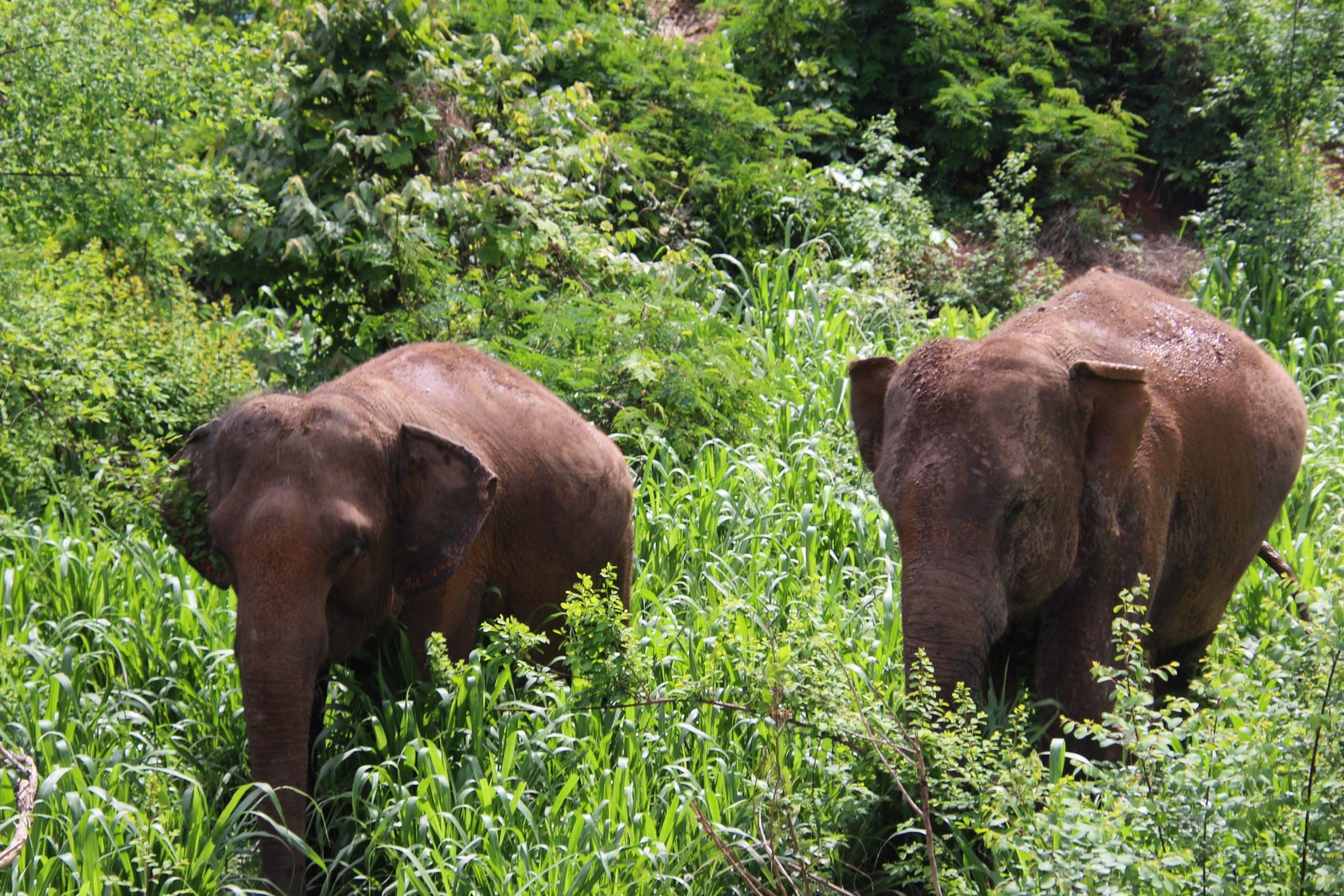MANUELA ELEPHANTS JUNE 2019 4