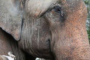MANUELA ELEPHANTS JUNE 2019 5