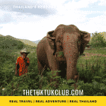 An elephant in deep grass with it's mahout