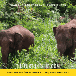 Two elephants walking through deep grass