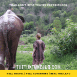 A woman walking alongside a large elephant through the countryside of Northern Thailand