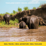 A family of four elephants enjoying cooling off in a river in Chiang Mai, Thailand