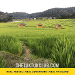 Three small wooden house in the middle of rice fields surrounded by forest and hills in Northern Thailand