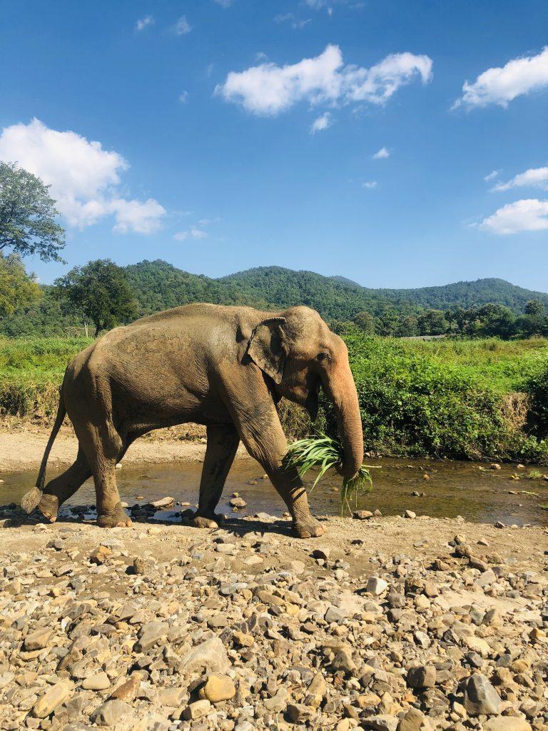 ELEPHANT IMAGES FOR BLOG 1