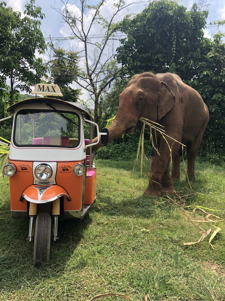 An elephant eating sugar cane standing next to a bright orange Tuk Tuk