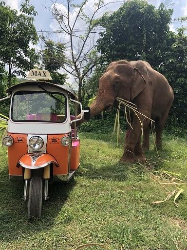 An elephant eating sugar cane standing next to an orange Tuk Tuk