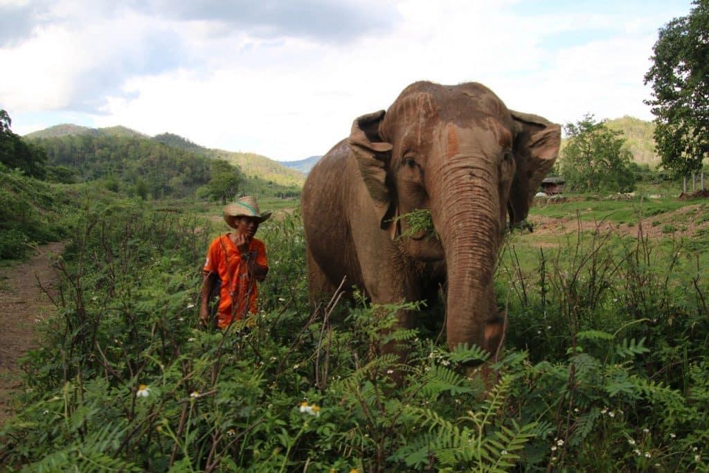 BEST ELEPHANT IMAGES MAE WANG 12